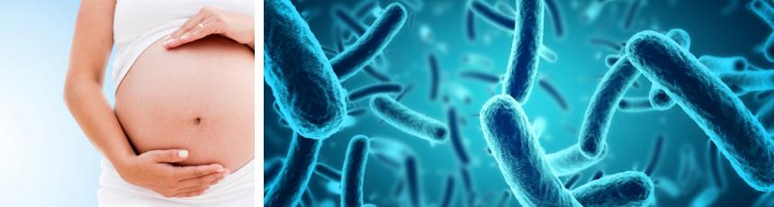 microbioma del útero de una mujer embarazada